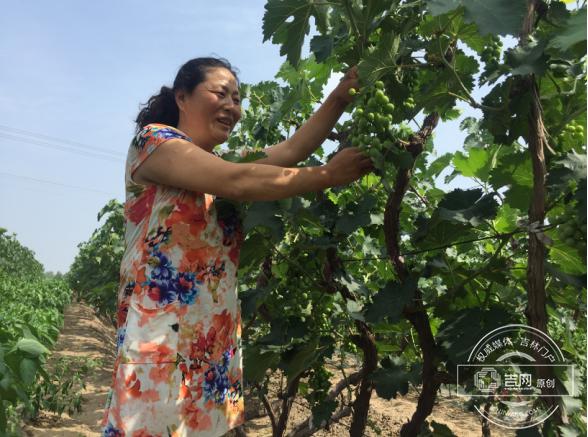 通榆县棚膜经济和庭院经济发展掠影